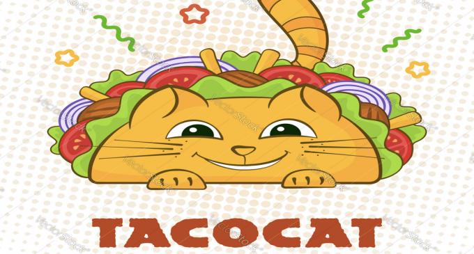 TacoCat Launches Merch Store