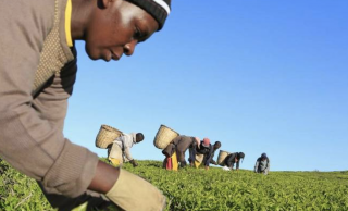 Sarafu: Kenyan Farmers' Go-To Cryptocurrency and Exchange Mode